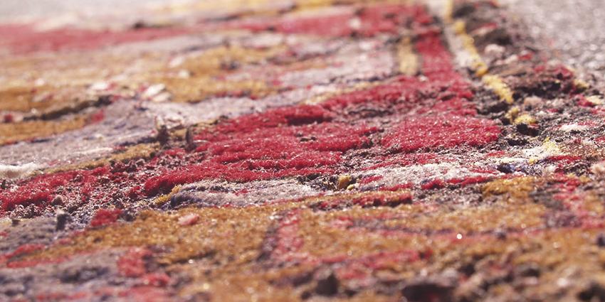 Tarme dei tappeti come combatterle